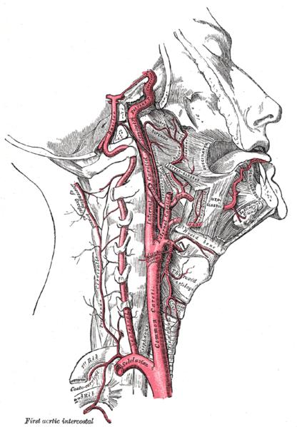Hals-DOPPLER-Untersuchung
